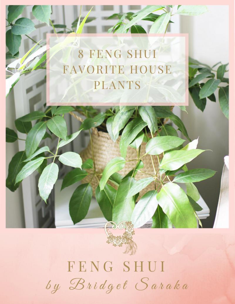 Expert Feng Shui Toulouse 8 feng shui favorite house plants - feng shuibridget